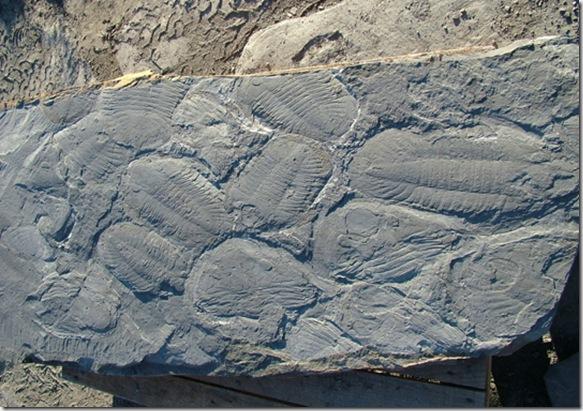 trilobites-540x380